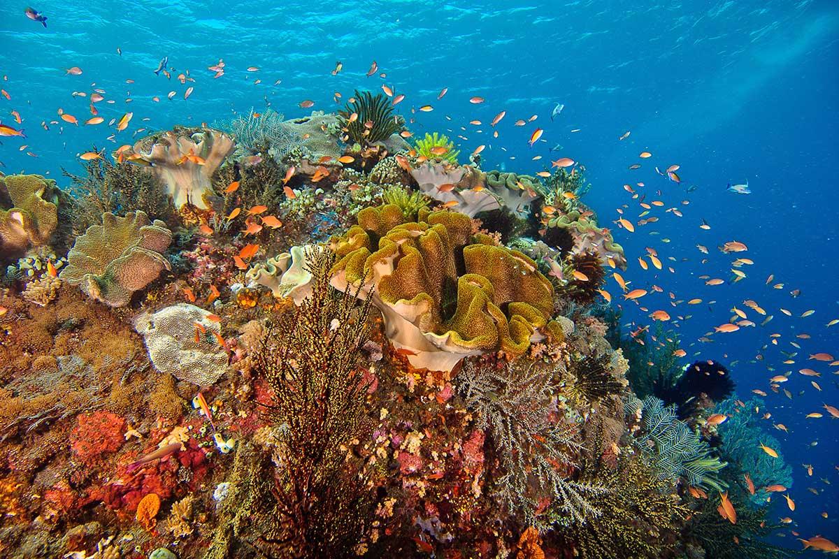 reef-large